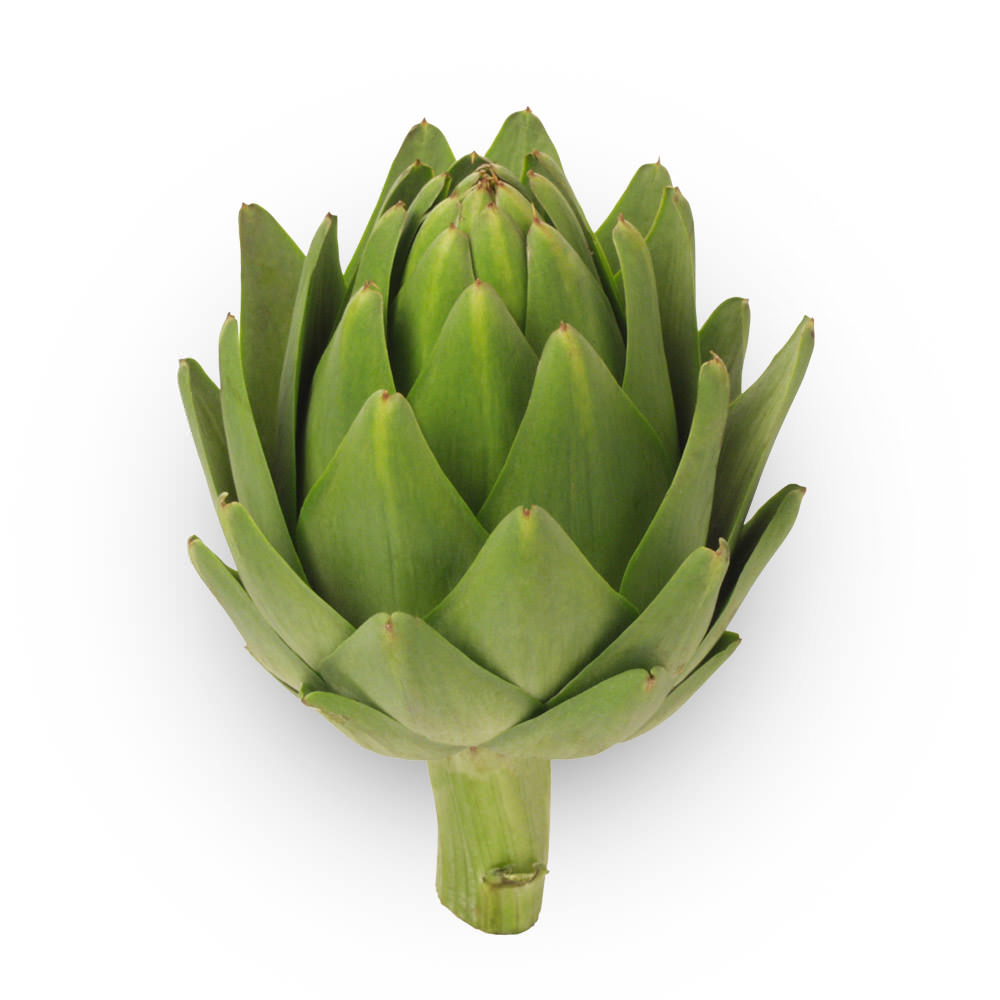 artichoke-andy-boy
