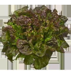 green-red-lettuce