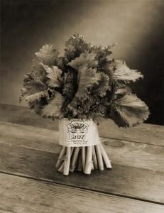 old-broccoli-rabe-portrait-photo