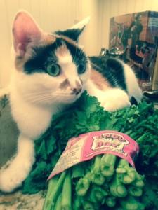 cat-that-likes-broccoli